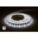 LED Strip RGBW 24V Strip IP33 5m x 12mm Colour Changing 12W per metre